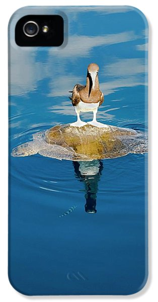 Brown Booby And Marine Turtle IPhone 5 Case by Christopher Swann