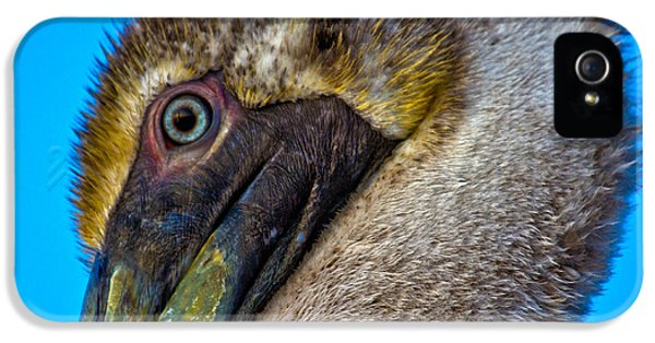 Brown Pelican IPhone 5 Case by Betsy Knapp