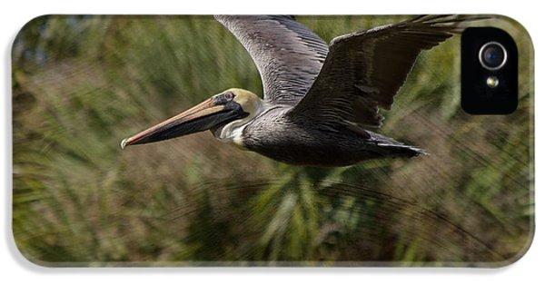 Brown Pelican - In Flight IPhone 5 Case by Kim Hojnacki