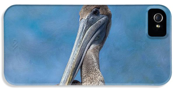 Brown Pelican IPhone 5 Case by Kim Hojnacki