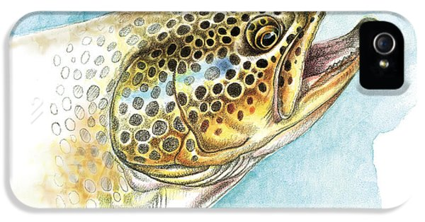 Brown Trout Study IPhone 5 / 5s Case by JQ Licensing