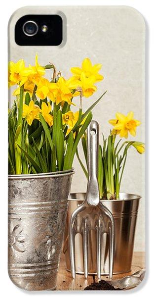 Buckets Of Daffodils IPhone 5 Case by Amanda Elwell