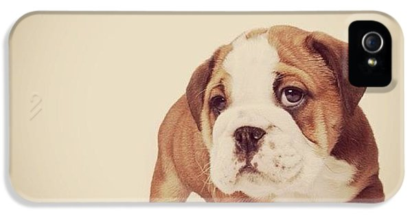 iPhone 5 Case - Bulldog Pup by Ritchie Garrod