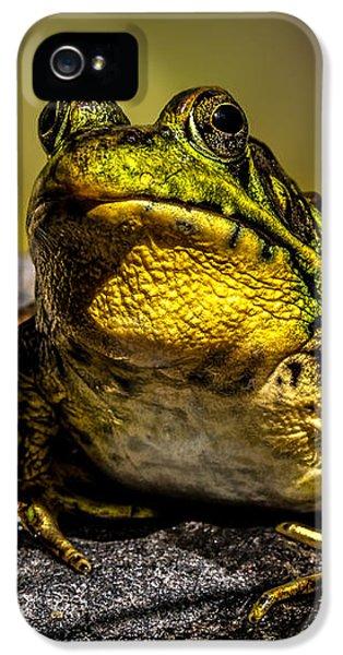 Bullfrog Watching IPhone 5 Case