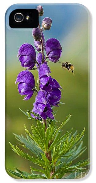 Bumblebee At Monkshood IPhone 5 Case