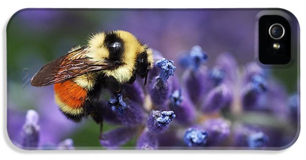 Bumblebee On Lavender IPhone 5 Case