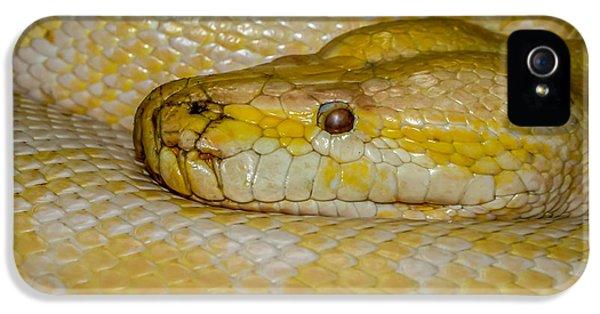 Burmese Python IPhone 5 / 5s Case by Ernie Echols