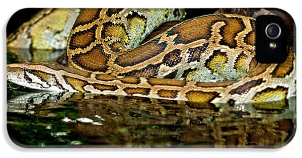 Python iPhone 5 Case - Burmese Python, Python Molurus by David Northcott