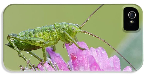 Bush Cricket IPhone 5 / 5s Case by Heath Mcdonald