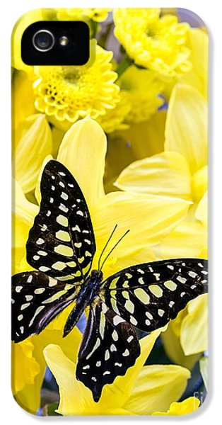 Stamens iPhone 5 Case - Butterfly Among The Daffodils by Edward Fielding