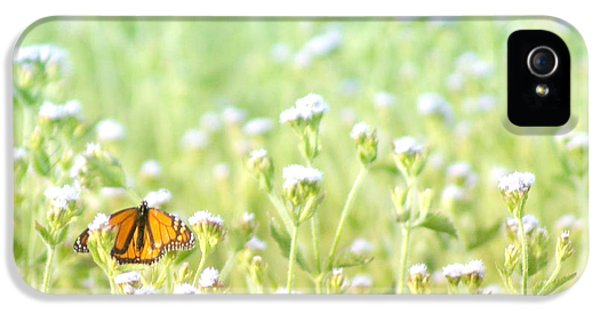 iPhone 5 Case - Butterfly Dreams by Holly Kempe