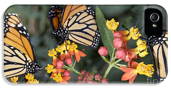 Butterfly On Flower IPhone 5 Case by Orly Katz