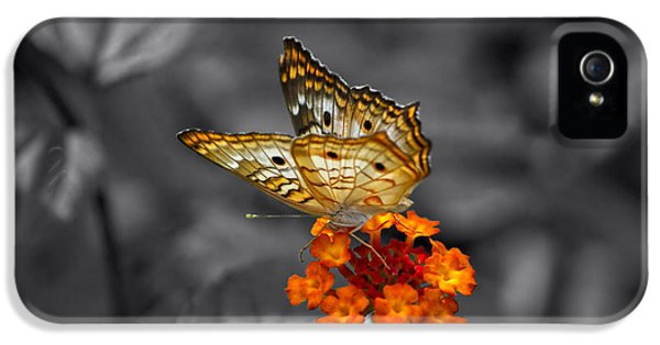 Butterfly Wings Of Sun Light Selective Coloring Black And White Digital Art IPhone 5 Case