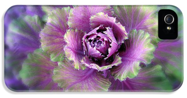 Cabbage Flower IPhone 5 Case by Jessica Jenney