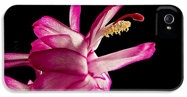 Cactus Blossom IPhone 5 Case by Mary Jo Allen