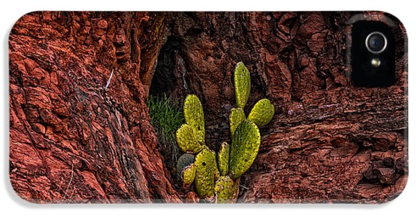 Cactus Dwelling IPhone 5 Case by Mark Myhaver