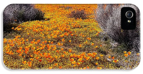 California Poppy Patch IPhone 5 Case by Glenn McCarthy Art and Photography