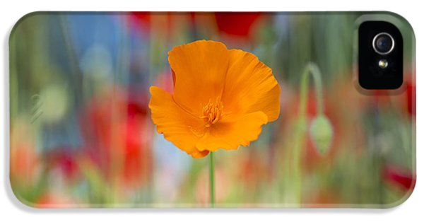 Stamens iPhone 5 Case - California Poppy by Tim Gainey