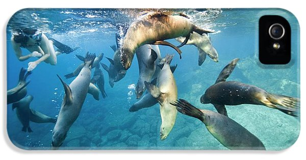 California Sea Lions And Snorkeller IPhone 5 Case by Christopher Swann