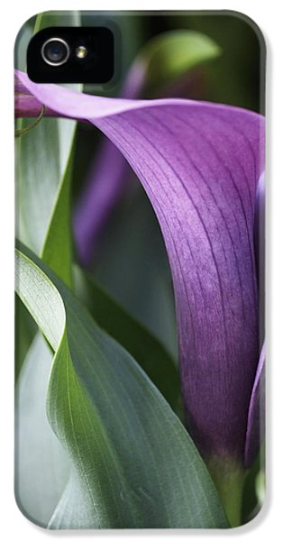 Lily iPhone 5 Case - Calla Lily In Purple Ombre by Rona Black