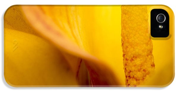 Calla Lily IPhone 5 Case by Sebastian Musial