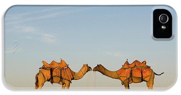 Camels Stand Face To Face In The Thar IPhone 5 Case