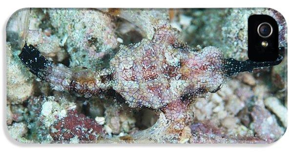 Camouflaged Pegasus Sea Moth IPhone 5 Case by Scubazoo