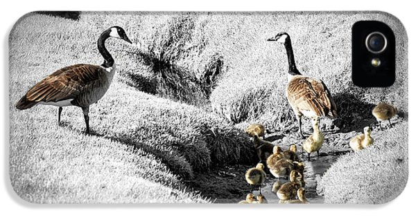 Canada Geese Family IPhone 5 / 5s Case by Elena Elisseeva
