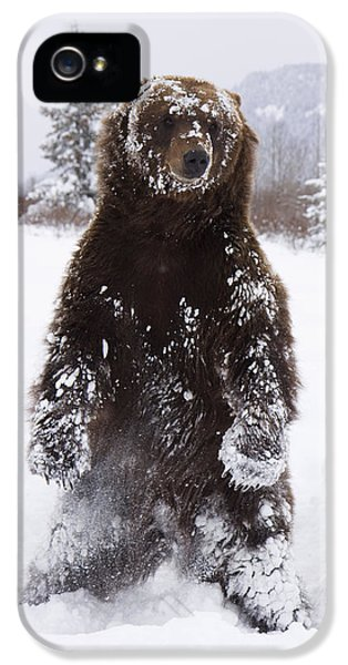 Captive Grizzly Stands On Hind Feet IPhone 5 Case by Doug Lindstrand