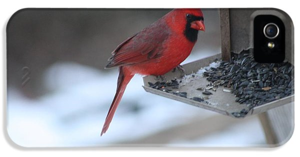 Cardinal 2 IPhone 5 Case by Michael Collins