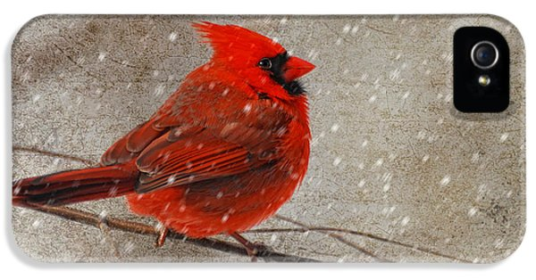 Cardinal In Snow IPhone 5 Case by Lois Bryan