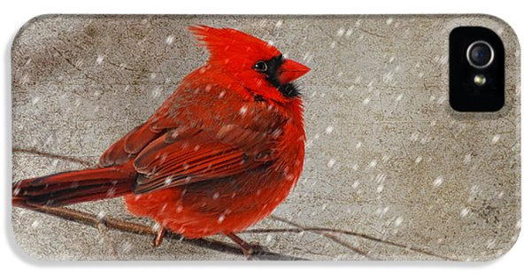 Cardinal In Snow IPhone 5 Case