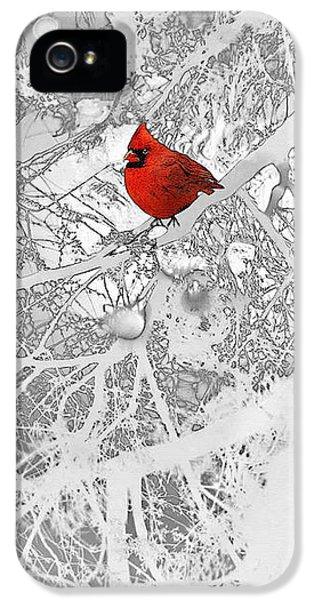 Cardinal In Winter IPhone 5 Case