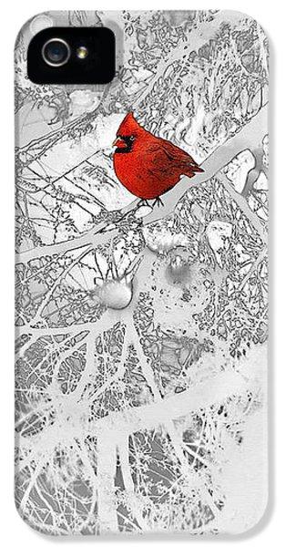 Cardinal In Winter IPhone 5 Case