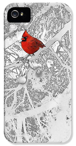 Cardinal In Winter IPhone 5 Case by Ellen Henneke