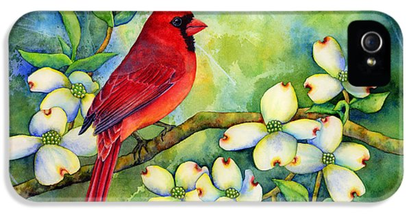 Cardinal On Dogwood IPhone 5 Case by Hailey E Herrera