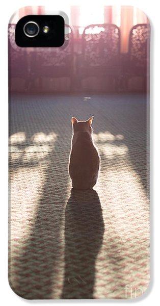 Cat Sitting Near Window IPhone 5 Case by Matteo Colombo