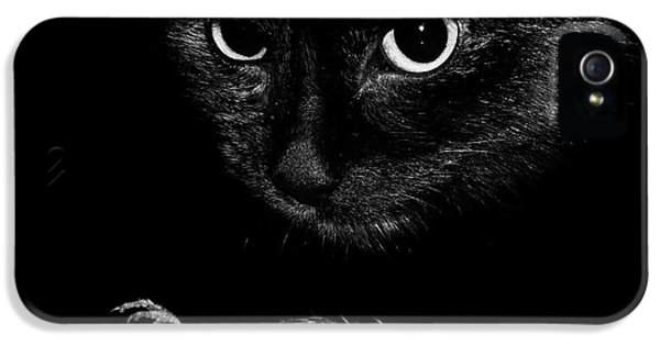 Wren iPhone 5 Case - Cat With A Dead Bird by Cordelia Molloy