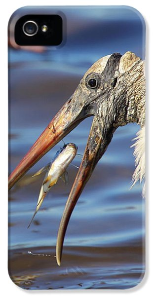 Catch Of The Day IPhone 5 Case by Bruce J Robinson