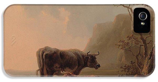 Cattle In An Italianate Landscape IPhone 5 Case by Jacob van Strij