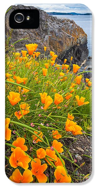 Cattle Point Poppies IPhone 5 Case by Inge Johnsson