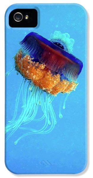 Cauliflower Jellyfish IPhone 5 Case by Louise Murray