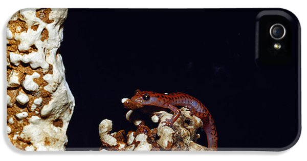 Cave Salamander IPhone 5 Case by Charles E. Mohr