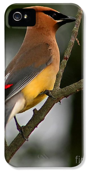 Cedar Wax Wing II IPhone 5 Case