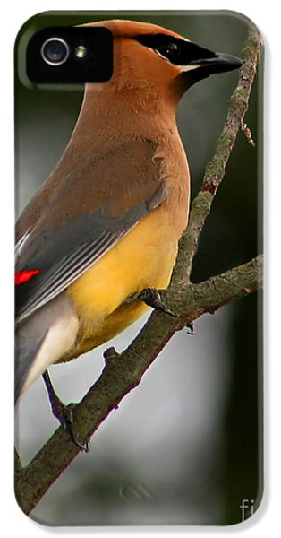 Cedar Wax Wing II IPhone 5 / 5s Case by Roger Becker