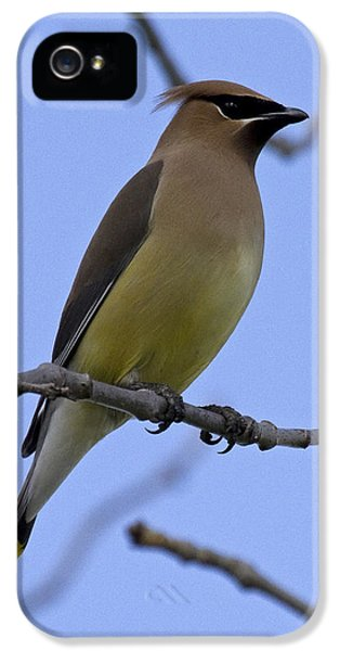 Cedar Waxwing 2 IPhone 5 / 5s Case by Eric Mace