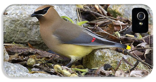 Cedar Waxwing IPhone 5 / 5s Case by Eric Mace