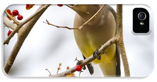 IPhone 5 Case featuring the photograph Cedar Waxwing by Ricky L Jones