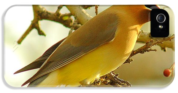Cedar Waxwing IPhone 5 / 5s Case by Robert Frederick