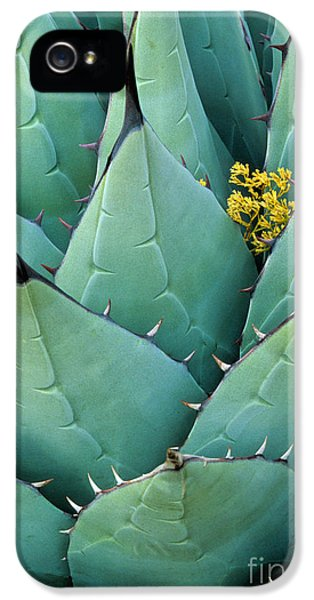Century Plant And Tiny Blossom IPhone 5 Case by Inge Johnsson